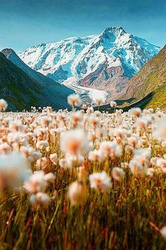 A mountain meadow in bloom, Tian Shan, Kyrgyzstan. The Tian Shan, is a large system of mountain ranges located in Central Asia. Tian Shan, Beautiful World, Beautiful Places, Simply Beautiful, Wonderful Places, All Nature, Spring Nature, Adventure Is Out There, Oh The Places You'll Go