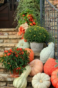 Spilling Down the Stairway - A colorful medley of pumpkins, gourds and mums spilling down the staircase. Check the local farmers markets or pumpkin patches. ~ from The Graceful Gardener Autumn Garden, Autumn Home, Thanksgiving Decorations, Autumn Decorations, House Decorations, Fall Harvest, Harvest Time, Autumn Inspiration, Southern Style