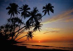 A post-card worthy view of the tropical beach at sunset, complete with palm tree silhouettes and a glorious colorful sky. Beautiful Islands, Beautiful Beaches, Cheap Wall Murals, Beach Mural, Palm Tree Silhouette, Window Films, Big Island Hawaii, Cool Walls, Maldives