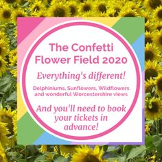We are opening for 10 days in August 2020 - tickets will be available to buy online very soon! #confettifields Delphinium, 10 Days, Confetti, Summer Time, Wild Flowers, Fields, Wicked, Bloom, Daylight Savings Time