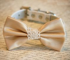 Cream Wedding dog Collar, Cream wedding accessory, Collar of 2015, Dog Bow tie, Dog lovers, bow with Lace