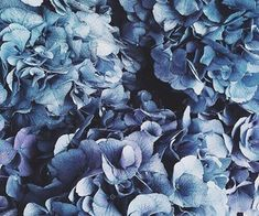 Happy Week Images of Inspiration {Cool Chic Style Fashion} Aesthetic Colors, Aesthetic Photo, Aesthetic Pictures, Witchy Wallpaper, Blue Grey, Blue And White, All Falls Down, Corpse Bride, Dusty Blue