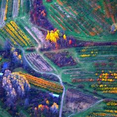 Aerial view of fall color in Massachusetts