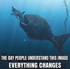 Everything Changes, Whale, Animals, Whales, Animales, Animaux, Animal, Animais