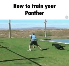 How to train your panther