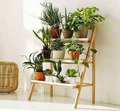 Like this plant stand.  Could figure how to make it.  Doesn't take a lot of space and could even put it out on the balcony.