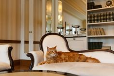 Cats welcome in Quisisana Palace Karlovy Vary