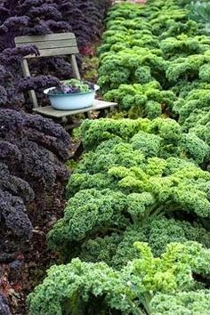 curly kale- great in smoothies with almonds and vanilla yogurt, bananas, a little juice.