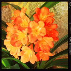 Cores da Primavera - Quinta de Sara #quintadesara #eventos #casamentos #baptizados #vilaverde #sabariz #braga  http://www.quintadesara.com/