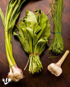 "The Garlic People's (aka The Jews') Steak: A Roasted Garlic Take on Vienna's Classic ""Vanilla"" Steak (Recipe). Raw Garlic, Wild Garlic, Garlic Oil, Garlic Sauce, Fresh Garlic, Roasted Garlic, Matzo Meal, Stefan Zweig, Jewish Recipes"