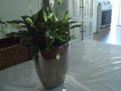 Planten in een gekregen vaas, zilverkleurig past mooi in het interieur.