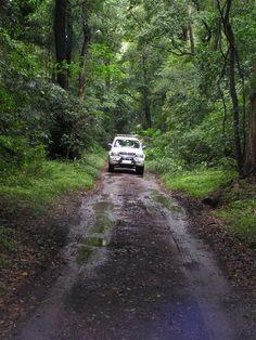 Dlinza Forest - Eshowe - Natal