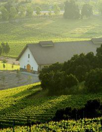 Foley Vineyards iItaly