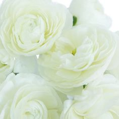 Add style and elegance to any arrangement with White Ranunculus Fresh Flowers. Ranunculus are classic wedding flowers, with cup-shaped blooms and layers of deli Calla Lily Flowers, Ranunculus Flowers, White Ranunculus, Peony Flower, Pink Peonies, Cut Flowers, Pretty Flowers, Fresh Flowers