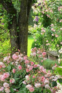 Rosa Garten. Ein Traum von einem verwunschenen Rosengarten!