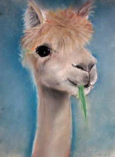 Alpaca Enterprise, pastel painting by Heidi Nieminen, 2012