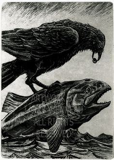 Raven artwork Raven crow Etching 5 inch x 8 inches by RAVENSTAMPS
