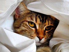 Katze, Kopf, Katze Porträt, Pet, Blick