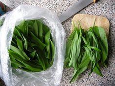 Celery, Health Fitness, Vegetables, Food, Drink, Green, Beverage, Veggies, Vegetable Recipes
