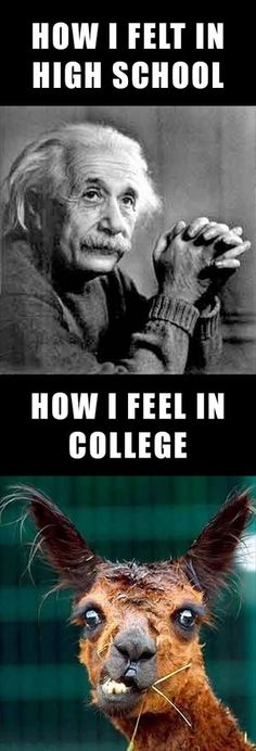 "Sadly, and I hate to admit it, and I could come up with bazillion excuses, but yes, yes this is how it was!  (Except it should read ""How I FELT in college.""  It was a long time ago!)"