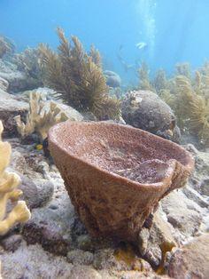Fascinating Bonaire - http://www.travelandtransitions.com/destinations/destination-advice/latin-america-the-caribbean/ Dive Friends Bonaire
