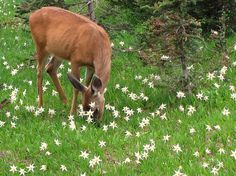 {a doe in a starry field} so pretty