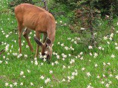 {a doe in a starry field} so pretty