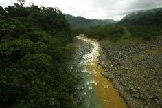 "The Rio Sucio or ""Dirty River,"" where one branch is colored yellow/brown by the minerals it carries from the Irazu Volcano, is seen mixing with the clear waters filtered by the tropical rainforest in the Braullio Carrillo National Park, 50 km (31 miles) east of San Jose."