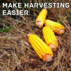 Summer Project: Make Garden Harvesting Easier