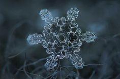 snowflakes by photographer Alexey Kljatov