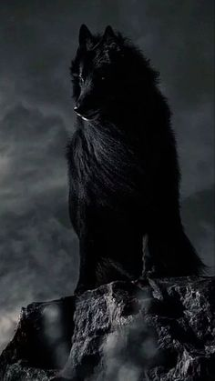 """""""I am there waiting, watching keeping to the shadows. But when you need me I'll step out of the shadows and protect what's """"Mine"""" Moto For the Armenian Scouts """"Black Wolf Never sleeps Always Alert Always Awake"""" Wolf Love, Beautiful Creatures, Animals Beautiful, Alpha Wolf, Wolf Artwork, Fantasy Wolf, Wolf Spirit Animal, Wolf Wallpaper, Wolf Pictures"""
