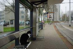 Poes Ake wacht tien jaar op tram|Opmerkelijk| Telegraaf.nl