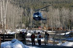 A pretty unique experience: the base of operations for our Pantheon Heli Skiing program is based at White Saddle Ranch, a working cattle ranch! Saddle Ranch, Ski Canada, Catamaran, Lodges, Cattle, Wilderness, Skiing, Base, Unique