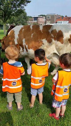 Partou aan de Biltstraat in Utrecht had een uitstapje naar de kinderboerderij waar ze ook pasgeboren biggetjes bezochten.