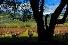 Best of Napa Valley: 8 Favorite Moments