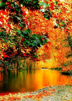Beautiful view of a set of trees with fall colors reflecting in the nearby water (1) From: Pics Visit, please visit