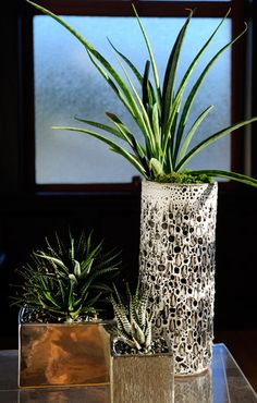 Greenery- I love plants/trees in the home!