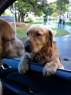 About to go to the vet – other dog had to say goodbye!