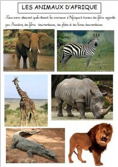 Science Projects For Kids, Activities For Kids, African Art Projects, Dear Zoo, Montessori Education, Toddler Learning, African Animals, Life Cycles, Zebras