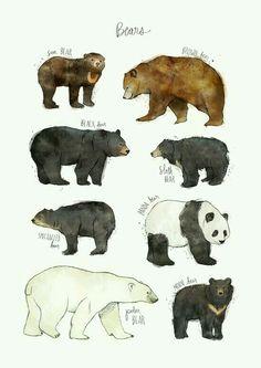 Espécies de Ursos.