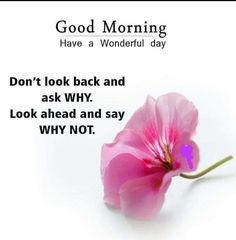 Good Morning Photos, Good Morning Flowers, Good Morning Friends, Good Morning Wishes, Good Morning Greeting Cards, Morning Greetings Quotes, Good Morning Messages, Positive Thoughts, Positive Quotes