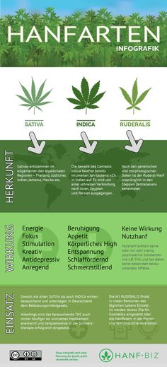 Hanf ist nicht gleich Hanf: schöne Infografik zum Unterschied zwischen Sativa, Indica und Ruderalis-Hanf. Gut Health, Health Fitness, Plant Fungus, Facts You Didnt Know, Puff And Pass, Stress, Happy Animals, Beautiful Gardens, Weed