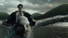 While Harry Potter is not a perfect representation of the mythical birds, the hippogriff named Buckbeak is a very magnificent example of a mythical bird in our modern day. This video shows him flying and carrying Harry around the grounds of Hogwarts. It gives a perfect visual of what the mythical bird was described to look like. Also not a creator bird, but still a mythical bird that showed up in many stories. Mythical Birds, Harry Potter, Prisoner Of Azkaban, High Definition, Hogwarts, The Dreamers, Scene, Soundtrack, Musicals