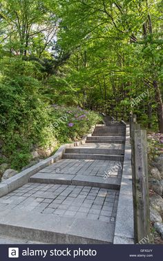 Download this stock image: Stairway in a lush and verdant forest at the Namsan Hill (or Namsan Park or Namsan Mountain) in Seoul, South Korea. - GFA3JY from Alamy's library of millions of high resolution stock photos, illustrations and vectors.