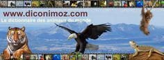 Animaux du monde - le Dictionnaire - www.diconimoz.com - Le dictionnaire des animaux