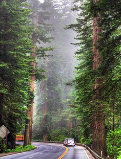 redwoods....might actually be doable someday