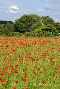 Biddeston, Wiltshire