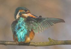 Kingfisher. To detail and his posturing , #Affiliate, #Kingfisher, #detail, #posturing #ad