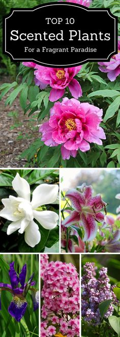 TOP 10 Scented Plants That Will Make Your Garden a Fragrant Paradise vintage garden design Ruby Lane Vintage Diy Garden, Summer Garden, Dream Garden, Lawn And Garden, Garden Projects, Garden Plants, Ruby Lane, Plantation, Garden Planning