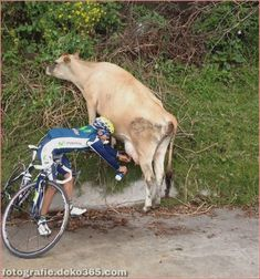Awesome These are the funniest moments of the Tour de France - Great Tour de France funny pictures - Funny Animal Pictures, Funny Images, Funny Photos, Funny Animals, Photo Velo, Living In Costa Rica, Picture Captions, The Funny, Hilarious